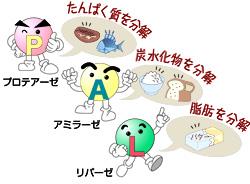 酵素の働きを阻害する食品や飲みものに気をつけようナターシャ